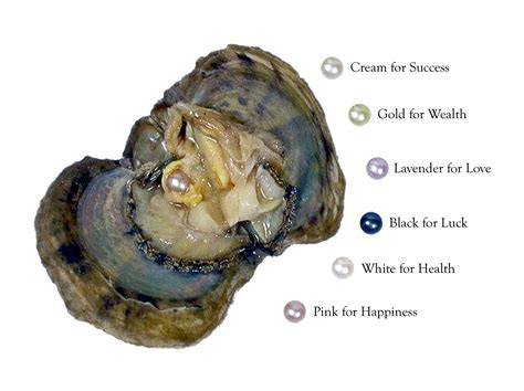 what color is oyster the secret metaphysical and healing properties of pearls