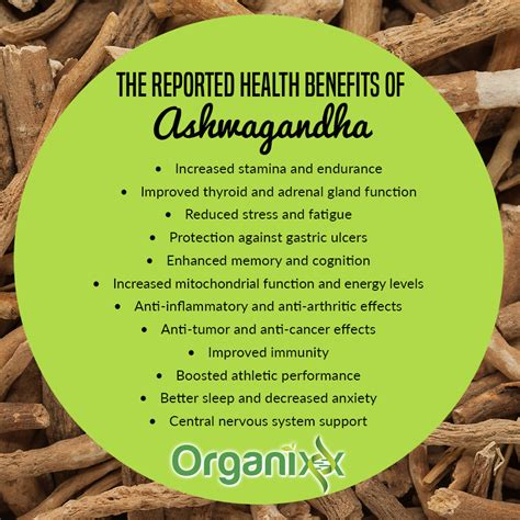how much indian blood to claim benefits how much indian 6 health benefits of indian ginseng ashwagandha