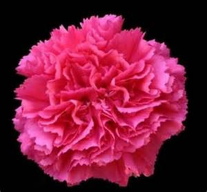 Wedding Candles Centerpieces by Wedding Flowers Wholesale Dark Pink Carnations