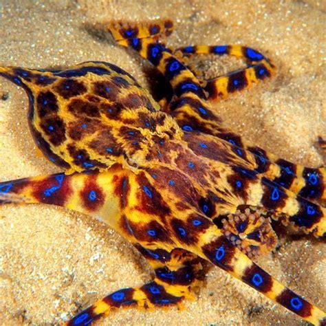 tattoo camo chile los 5 animales marinos m 225 s peligrosos del mundo