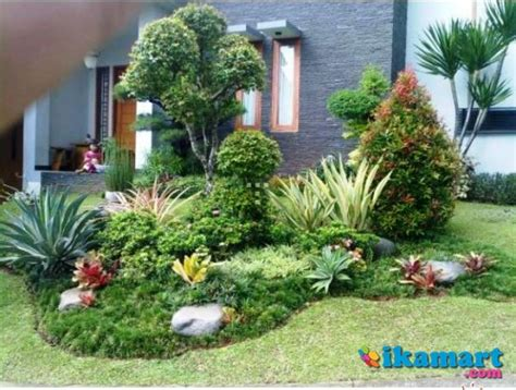 supplier rumput gajah mini golf jepang babat pohon hias