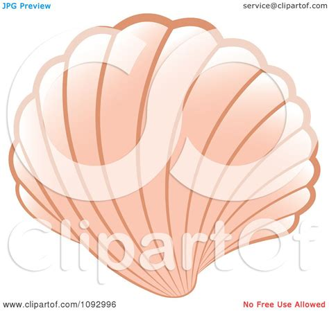 Nbc Shells Out Money For Royalty by Clipart Pink Scallop Sea Shell Royalty Free Vector
