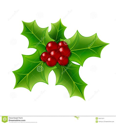 images of christmas holly leaves christmas holly berry stock image image 34471011