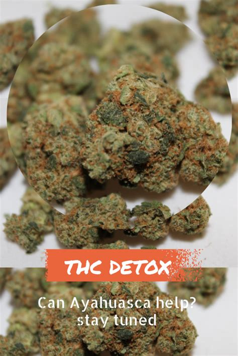 What Is The Best Cannabis To Detox From Oxycontin by How Do You Detox Your From Marijuana What Autos Post
