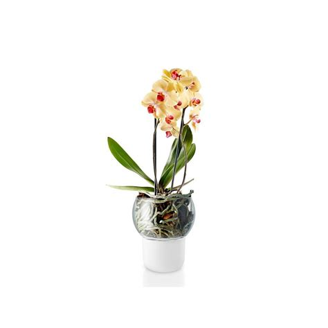 vasi per orchidee vaso per orchidee piccolo design shop