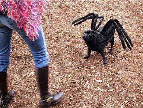 spider costume for dogs tarantula spider costume