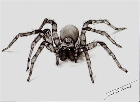 pajak quot spider quot by lukiskajplotek on deviantart