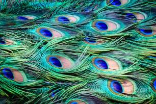 Duvet Cover Green Peacock Feathers Abstract Photograph By Peta Thames