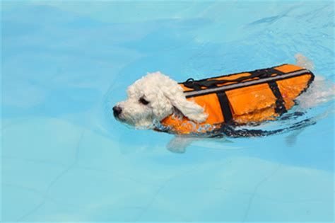 water intoxication dogs water intoxication in dogs much of a thing canine chronicle