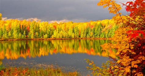 of wisconsin colors for leaves turning color in northwoods wi