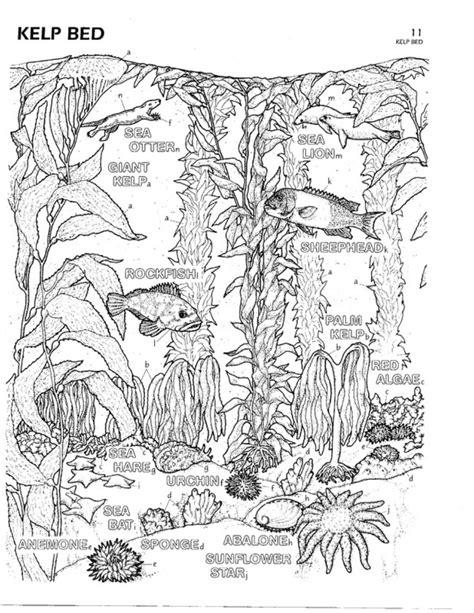 coloring book for biology color plate 11 kelp bed marine biology prunedale