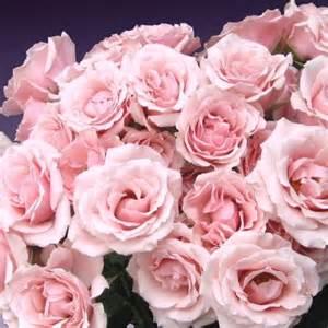 Rose Edible Flowers - spray rose majolica rosa cut flowers sunflora