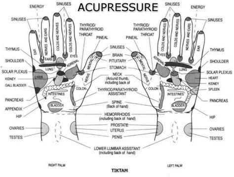 pressure points hair growth diy acupressure fitnessthree60