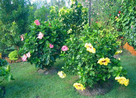Valley Hibiscus Worldwide Hibiscus Garden In