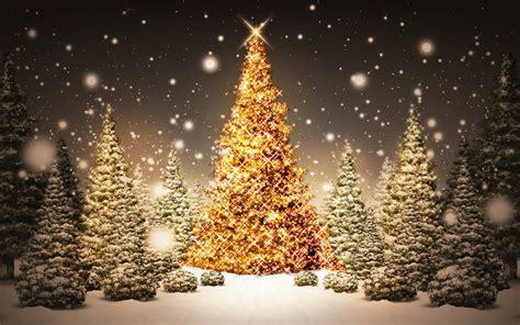 weihnachtsbaum hintergrundbilder weihnachtsbaum frei fotos
