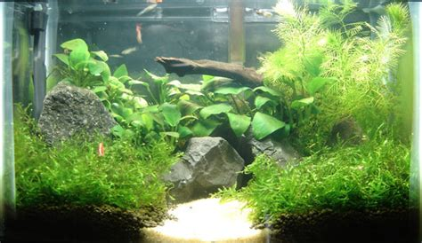 Aquascaping For Beginners by Greater Washington Aquatic Plant Association