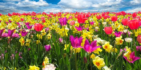 spring start make a fresh start today with a spring detox homeopathy