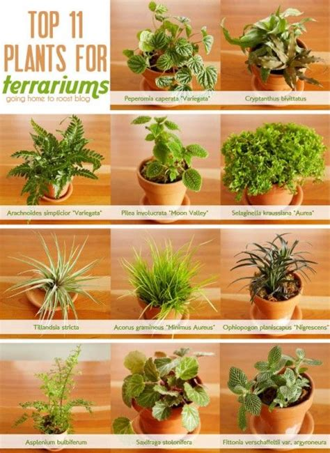 best plants for closed terrariums terrarium diy comment construire terrarium terrarium plante