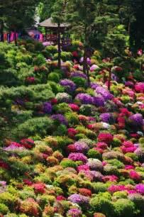 azalea bushes at shiofune kannon temple tokyo japan