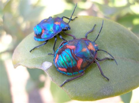 colorful bugs entomology the science of insect october 2011