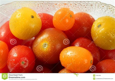 Tomat Multi Color cherry varied multi color tomatoes stock photos image 7581593