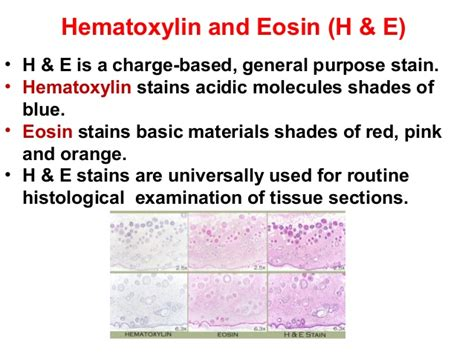 why are histological sections stained preparation of histological slide