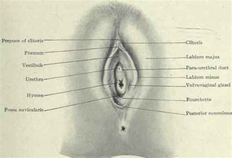 diagram hymen causes symptoms or indicators and response to an ovarian