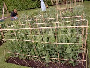 How To Get Rid Of Garden Pests - kgoral botanics stories