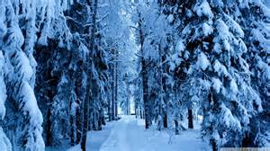 tree in snow wallpaper snowy wallpapers wallpaper cave