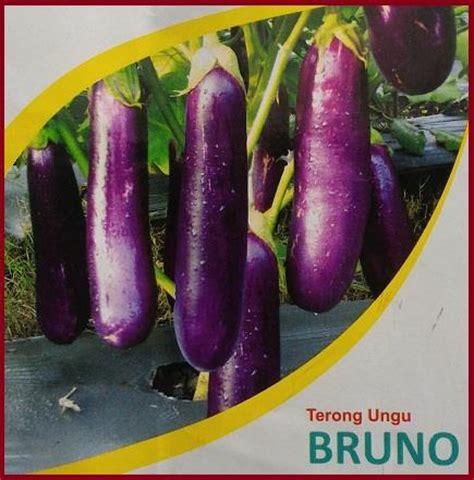 Bibit Terong Ungu jual benih terong ungu quot bruno quot harga murah bogor oleh