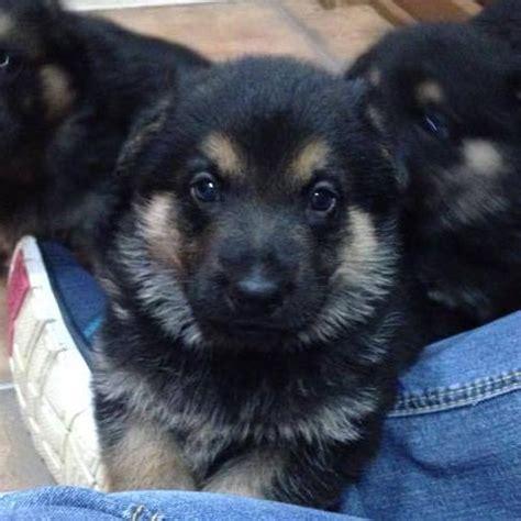 and they call it puppy and they call it puppy by frisco17 on deviantart