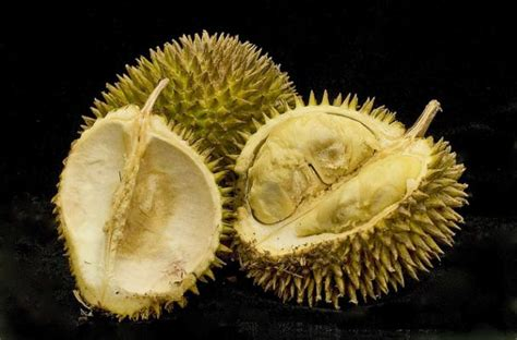 foodista  king  fruits  delicious durian recipes