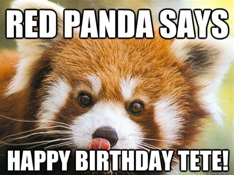 Red Panda Meme - red panda says happy birthday tete misc quickmeme