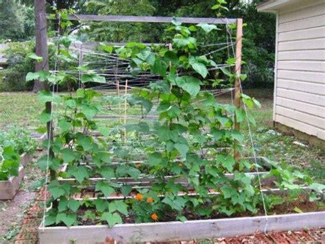 1379 Best Vegetable Gardening Images On Pinterest Vegetable Garden Trellises