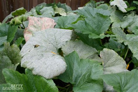 names of fungal diseases in plants plant diseases in the garden how to prevent and them