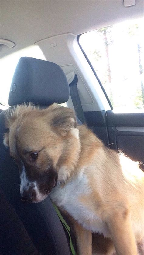 going to the dogs 15 times dogs realized they were going to the vet instead of the park their reactions