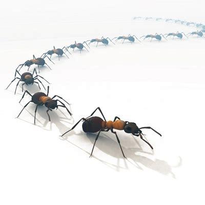invasione di formiche in cucina fatto in casa formiche in casa rimedi naturali per