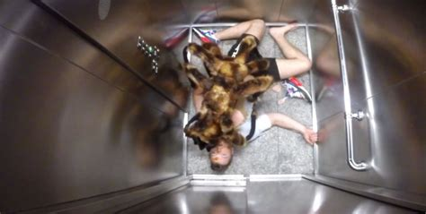 puppy spider greatest prank these jokers put a spider on a and scared the