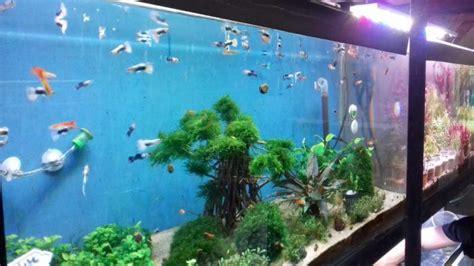 Tempat Jual Bibit Lobster Air Tawar aquarium udang hias air tawar aquarium mini air tawar doovi manfaat filter air ro untuk ikan