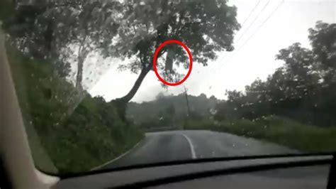ghost on real ghost on ghost on tree real ghost