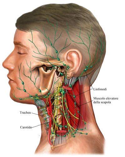 linfonodi testa collo ascesso dentale sintomi e cura