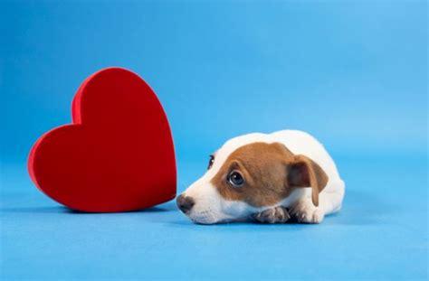 malattie portate dai gatti attenzione lo xlitolo 232 pericoloso per i cani