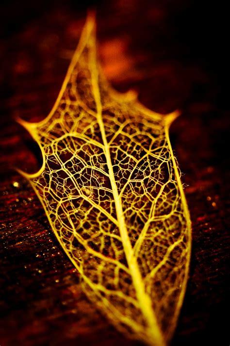 printable skeleton leaves 25 best ideas about leaf skeleton on pinterest