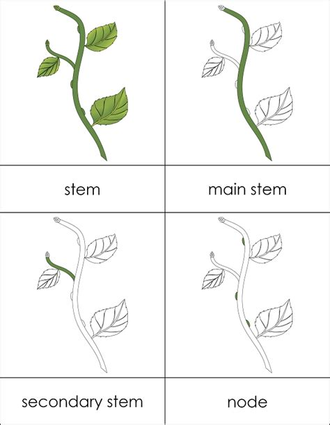 Template For Montessori Nomenclature Cards by Parts Of A Stem Cards From Montessori For Everyone