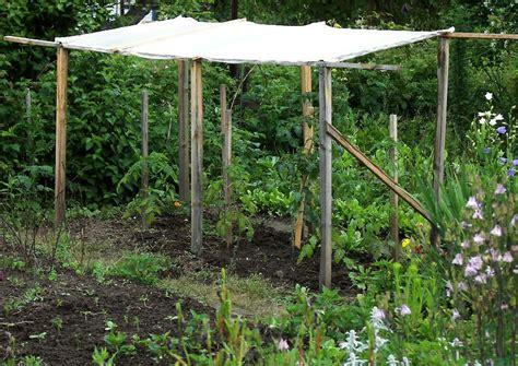 garten im mã rz pflanzen tomaten anbauen anbau anleitung gie 223 en geizen