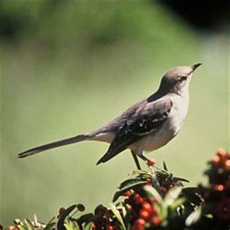 identifying backyard birds identifying backyard birds identifying birds audubon backyard ideas gogo papa