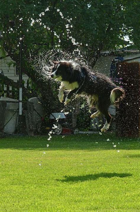Spiele Für Hunde Im Garten by Die S 252 223 Esten Bilder Hunden