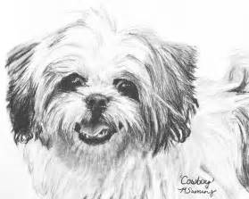 smiling shih tzu drawing by kate sumners