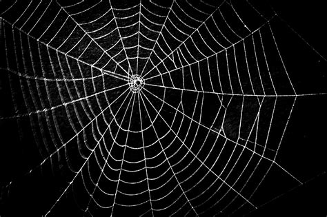 web pattern black widow spider web photos weneedfun