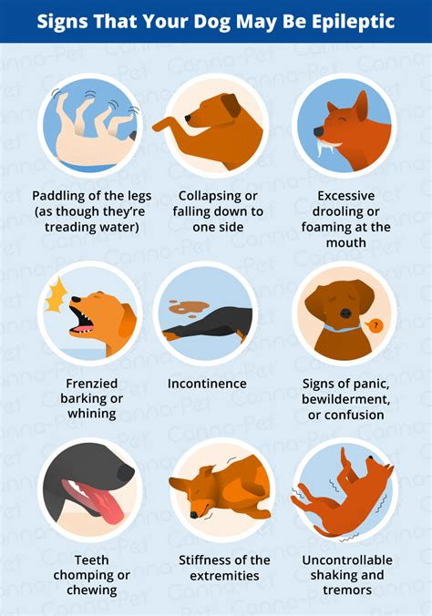 dogs and seizures epilepsy in dogs signs symptoms treatment canna pet